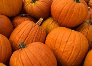 pumpkins1-300x216
